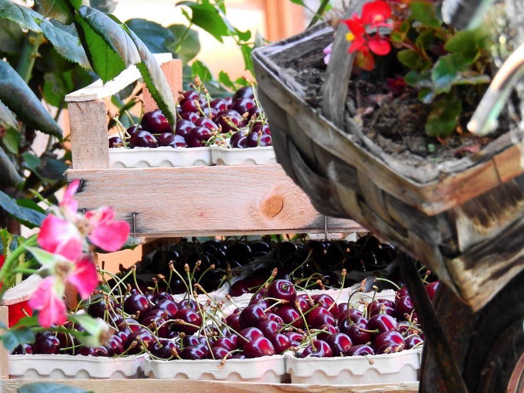 Fresh sweet juicy cherries in a basket